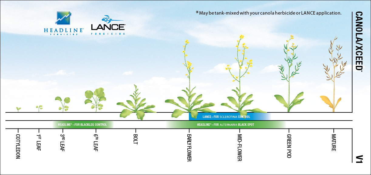 West - BASF Products - Lance 2011 Campaign